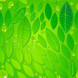Seamless beautiful green leaves background. Vector seamless beautiful green leaves with water drops background illustration Stock Images