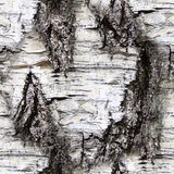 Seamless birch bark. texture, background royalty free stock images