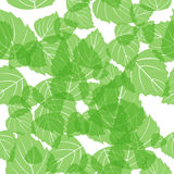 Seamless birch leaves Royalty Free Stock Photo