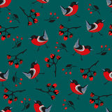 Seamless Bird Pattern. Bullfinches, spruce Royalty Free Stock Photo