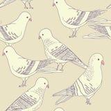 Seamless bird pattern. Vector seamless pattern with pigeon birds Stock Photo