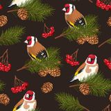 Seamless birds and spruce branches Stock Image