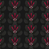 Seamless black background with gray crocuses.saffron .seamless pattern. Stock Photo