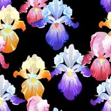 Seamless Black Background with Iris Flowers Royalty Free Stock Photography