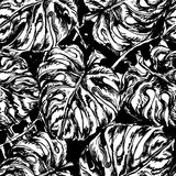 Seamless pattern with exotic leafs. Seamless black and white pattern with exotic leafs of Munster, Tropical summer print. Can be used for wallpaper, pattern Royalty Free Stock Images