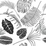 Seamless black and white pattern with exotic leaves. Royalty Free Stock Images