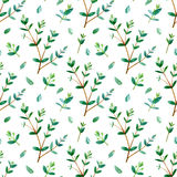 seamless blom- modell Eukalyptusfilialer Royaltyfri Bild