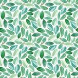 seamless blom- modell Eukalyptusfilialer vattenfärg stock illustrationer