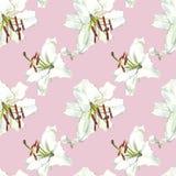 seamless blom- modell Vita liljor för vattenfärg, hand dragen botanisk illustration av blommor Royaltyfria Foton