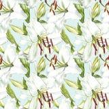 seamless blom- modell Vita liljor för vattenfärg, hand dragen botanisk illustration av blommor Arkivbilder