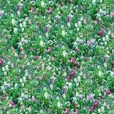 seamless blommaängmodell Royaltyfri Bild