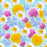 Seamless blue background with meadow flowers. Joyful seamless pattern with daisies, clover, dandelion and chicory for the holidays vector illustration