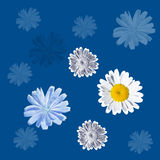 Seamless blue pattern with daisies and chicory. Joyful seamless pattern with daisies and chicory for the holidays royalty free stock images