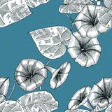 Seamless blue pattern with morning glory. Hand drawn. Graphics vector illustration