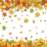 Seamless border Autumn falling leaf background isolated on white. Royalty Free Stock Image