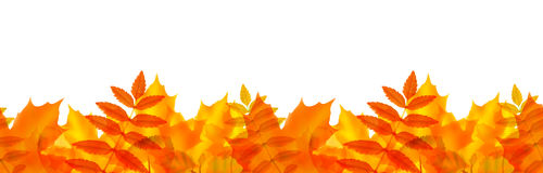 Seamless border with autumn leaves. Vector illustration Stock Images