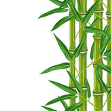 Seamless border with bamboo plants and leaves. Royalty Free Stock Photos