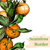 Seamless border composed of watercolor tangerines. Hand drawn Stock Photos