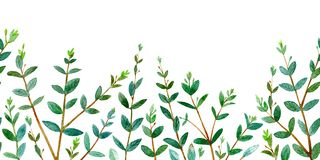Seamless border of a eucalyptus branches. Floral frame. Royalty Free Stock Photos