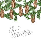 Seamless border with fir branches and cones. Detailed vintage illustration.  Stock Photos