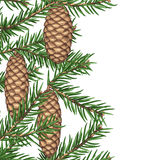 Seamless border with fir branches and cones. Detailed vintage illustration.  Royalty Free Stock Photos