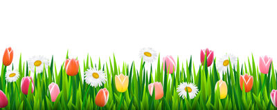 Seamless border with grass and flowers Stock Image