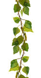Seamless border of green birch leaves Royalty Free Stock Photos