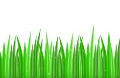 Seamless border with green grass on a white background with drops of dew. Vector element for frames, banners and for your design Royalty Free Stock Photos