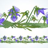 Seamless border of pansies. Vector seamless decorative border of the wild pansy Stock Image