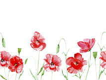 Seamless border from poppy flowers. Watercolor hand drawn illustration.White background Stock Photography