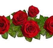 Seamless border with red roses. Isolated on white background. Seamless border with red roses. Isolated on white background Stock Images