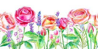 Seamless border of a roses and lavender.Briar and herbs. stock illustration