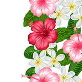 Seamless border with tropical flowers hibiscus and plumeria. Background made without clipping mask.  Royalty Free Stock Image