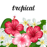 Seamless border with tropical flowers hibiscus and plumeria. Background made without clipping mask.  Royalty Free Stock Photography