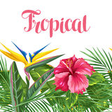 Seamless border with tropical leaves and flowers. Palms branches, bird of paradise flower, hibiscus Stock Photo