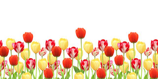 Seamless border with tulips Royalty Free Stock Photography
