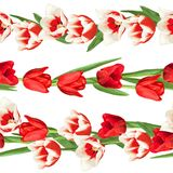 Seamless borders with red and white tulips. Beautiful realistic flowers, buds and leaves Stock Photos