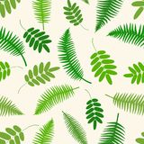 Seamless botanical pattern with fern branches. Vector illustration Stock Photos