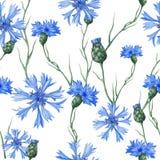 seamless botanisk modell Royaltyfri Bild