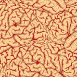 Seamless brain convolutions. Stock Image