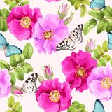 Seamless brier rose. Brier rose flowers and berries vector seamless background Royalty Free Stock Image