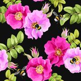 Seamless brier rose. Brier rose flowers and berries vector seamless background Royalty Free Stock Photos
