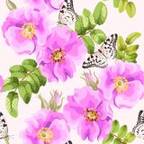 Seamless brier rose. Brier rose flowers and berries vector seamless background Stock Photos