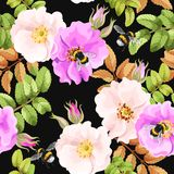 Seamless brier rose. Brier rose flowers and berries vector seamless background Stock Photography