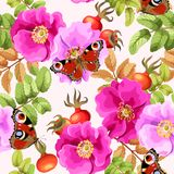 Seamless brier rose. Brier rose flowers and berries vector seamless background Royalty Free Stock Photo