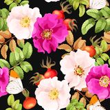 Seamless brier rose. Brier rose flowers and berries vector seamless background Royalty Free Stock Photography