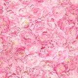 Seamless Bright Pink Rose Buds Pattern Stock Images