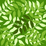 Seamless brunches. Seamless background made of layered green brunches Royalty Free Stock Images