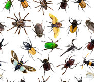 Seamless bug pattern. On a white background stock photos