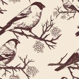 Seamless bullfinch pattern. Hand drawn vector. Vintage style Stock Image